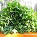 Об удобрениях из крапивы для подкормки растений